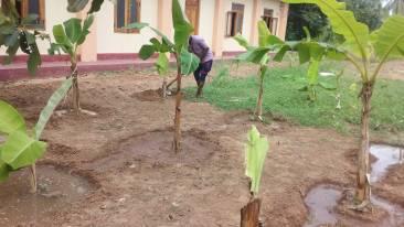 Banana Plantation - Community well