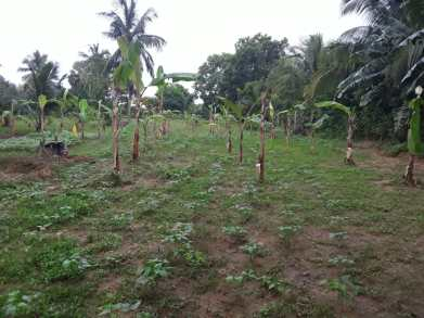 community-well-market-garden-1